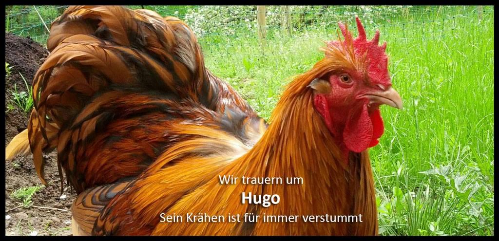 Wir trauern um Hugo